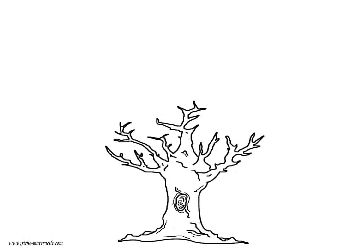 automne arbre