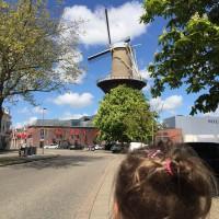 3 jours autour de Rotterdam le plus grand moulin au monde