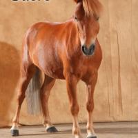poney