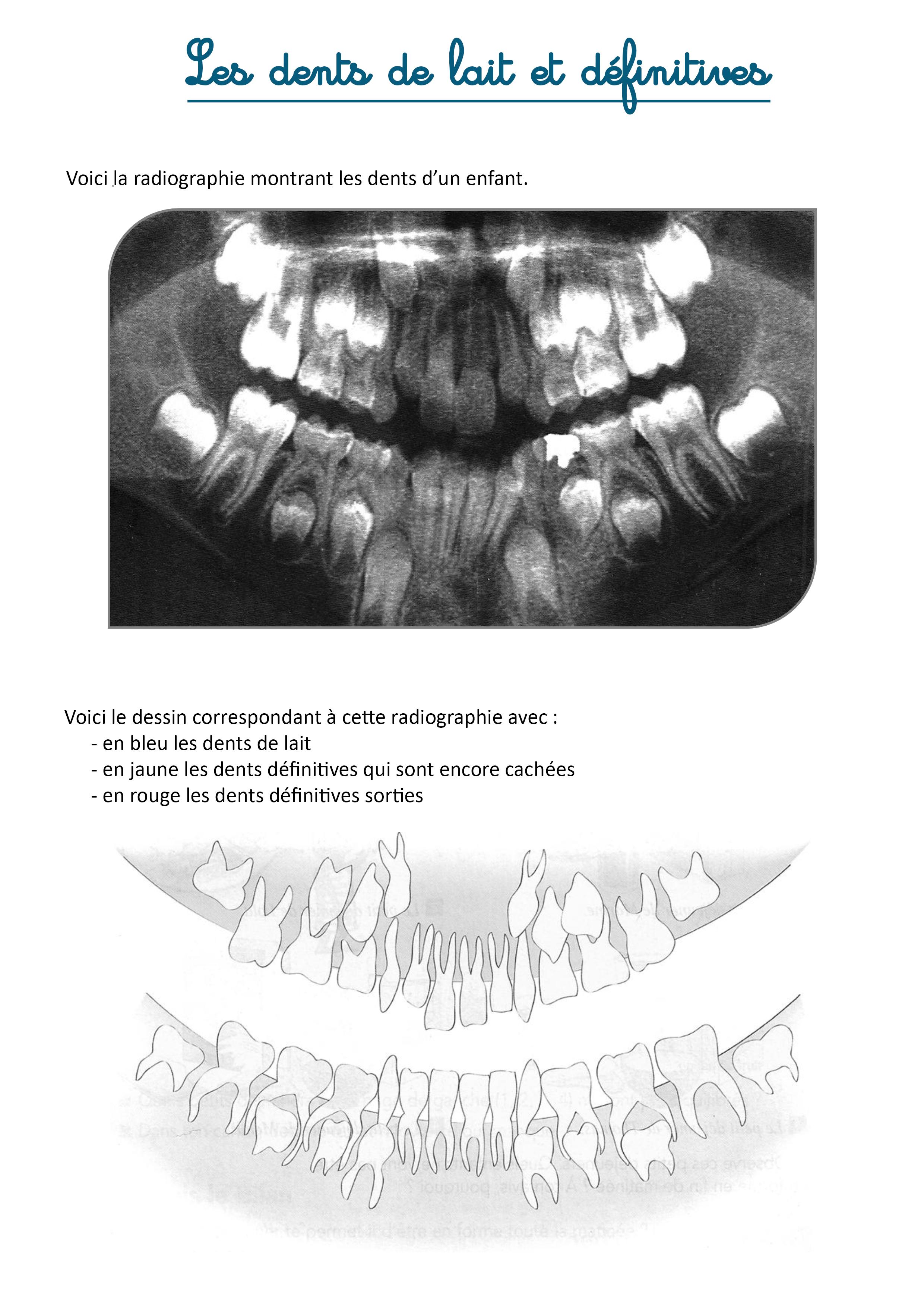 les dents exercices instruction en famille