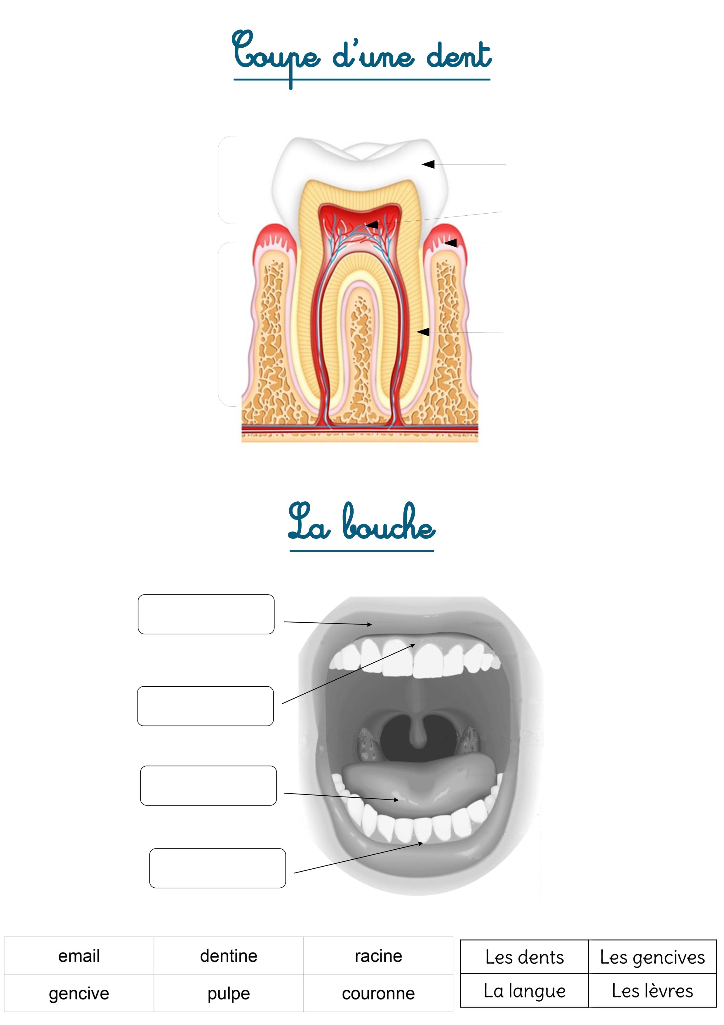 les dents exercices enfants primaire
