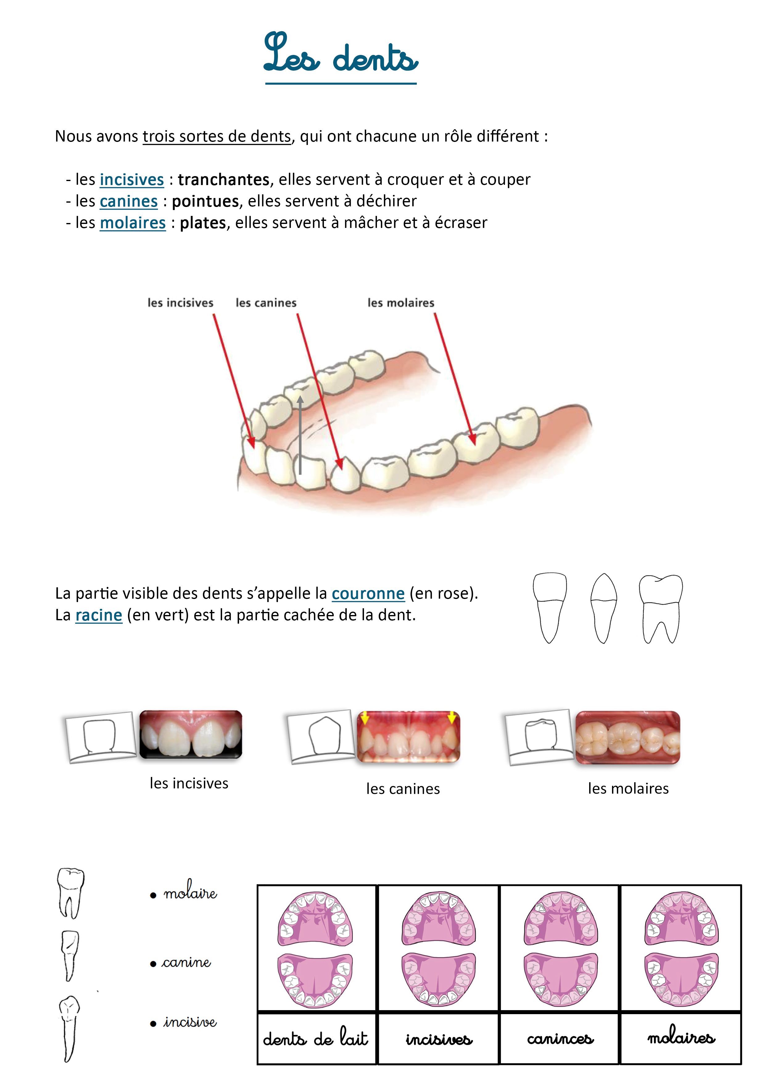 lecon sur les dents