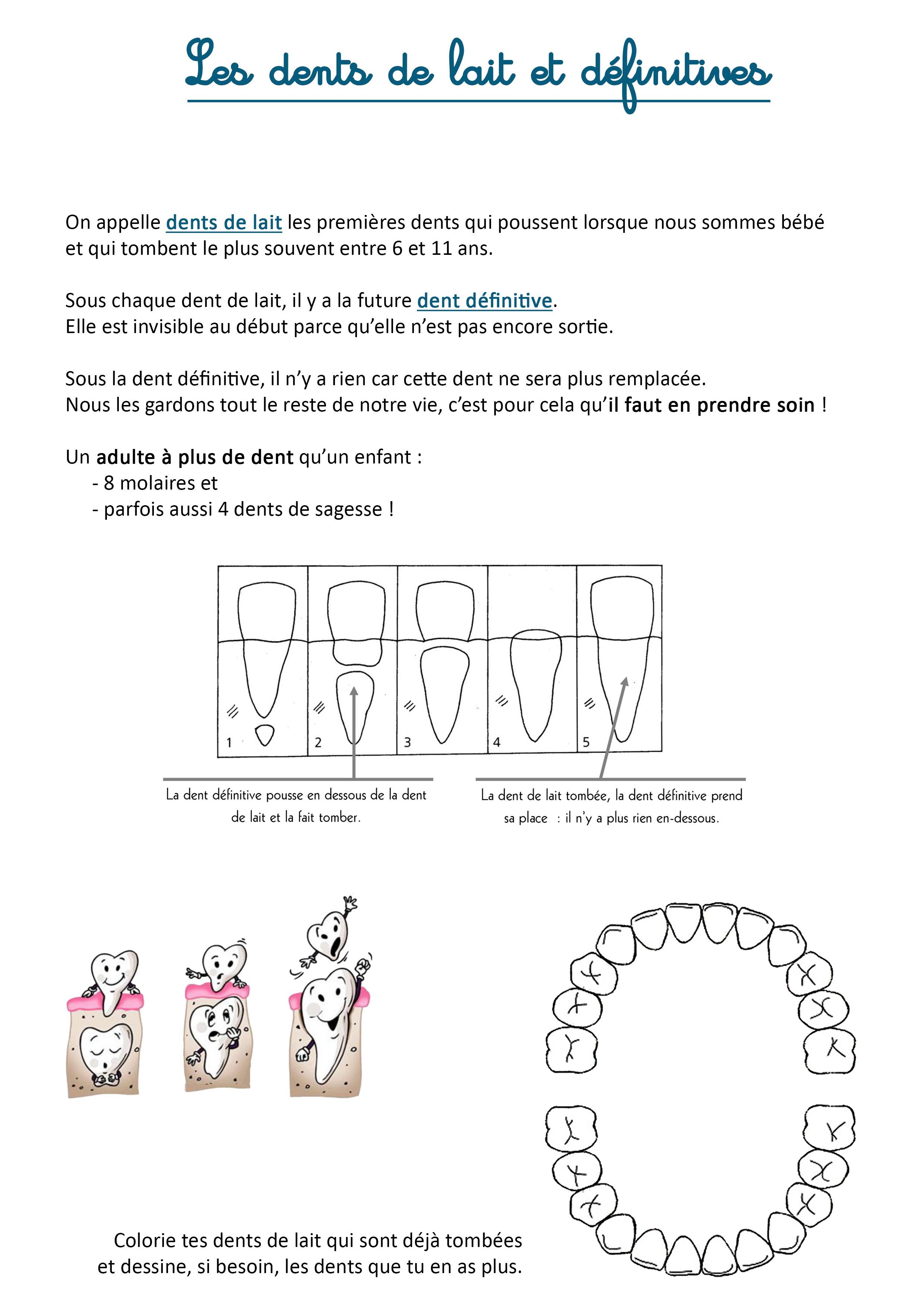 les dents de lait et définitives