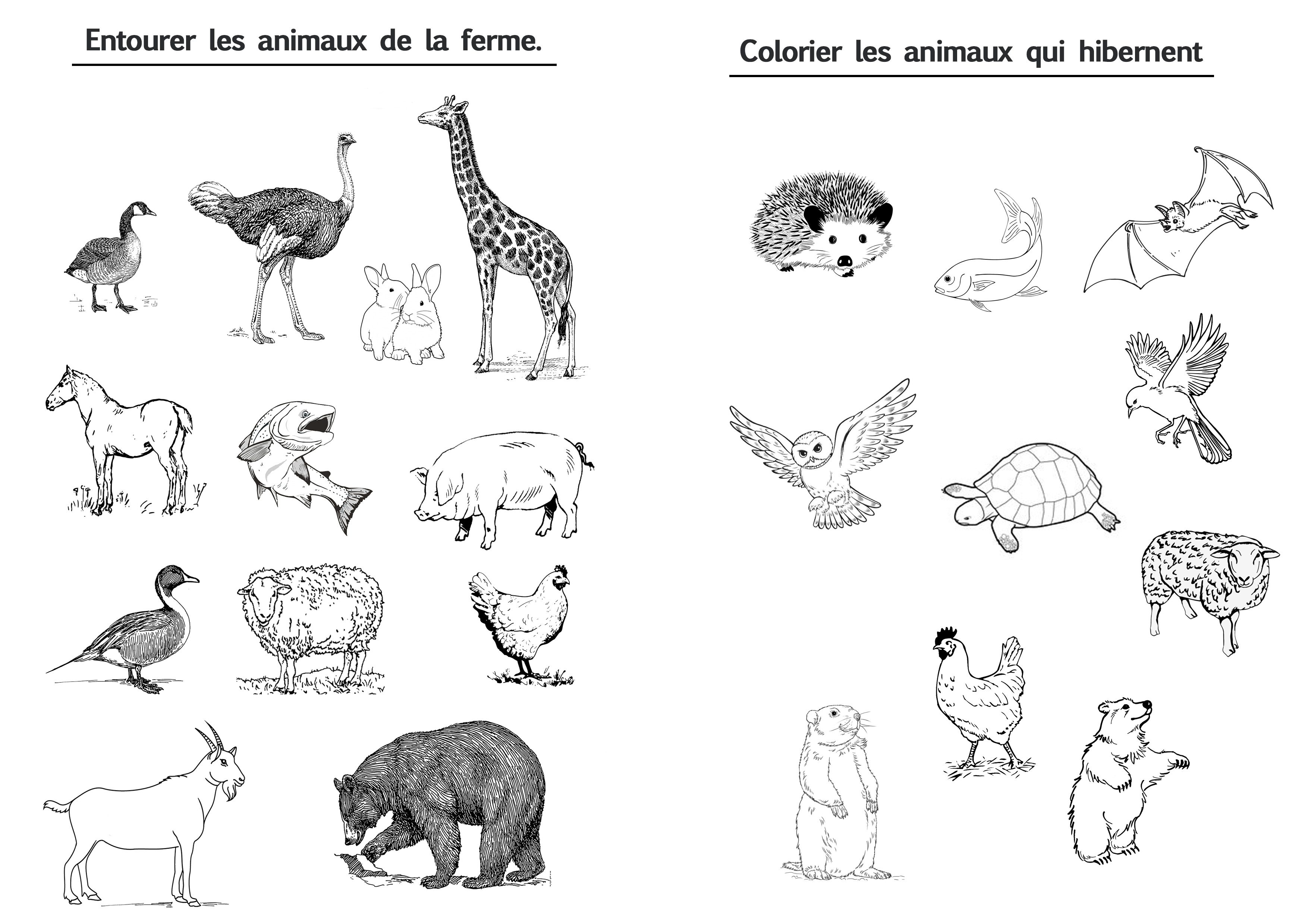 exercices sur les animaux