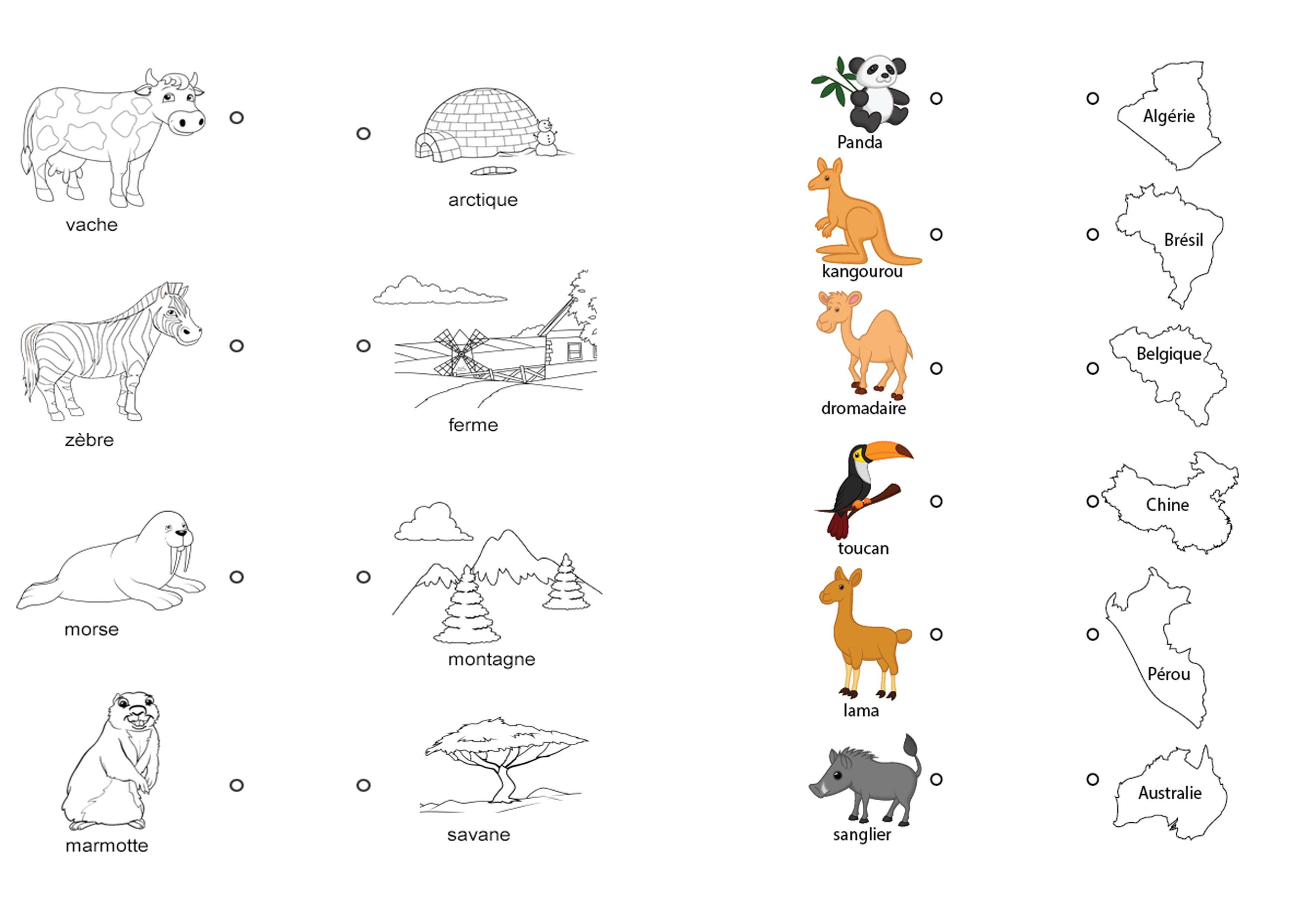 découvrir les animaux