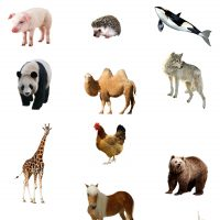 exercices ief les animaux