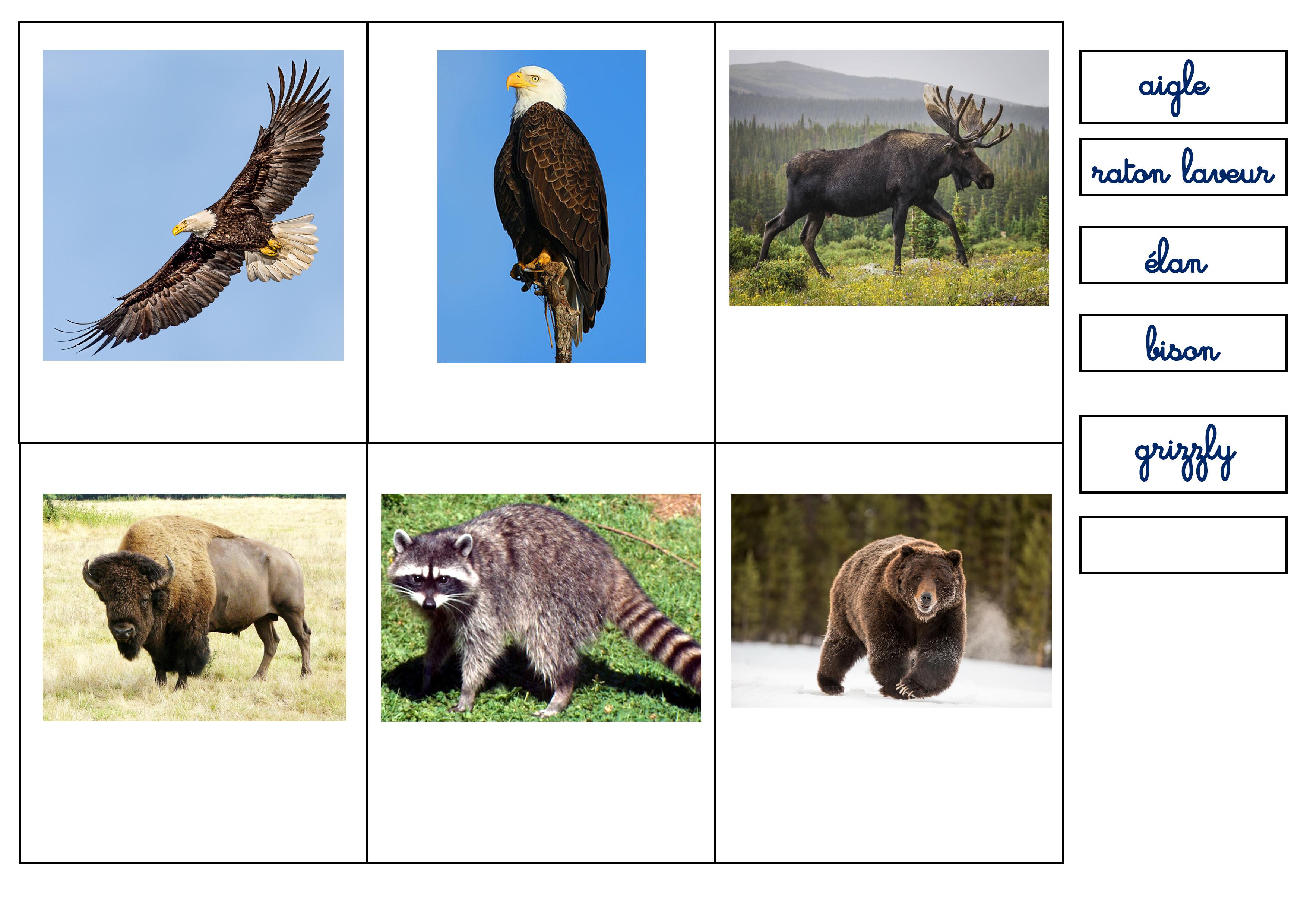 Lapbook USA ief animaux nomenclature montessori