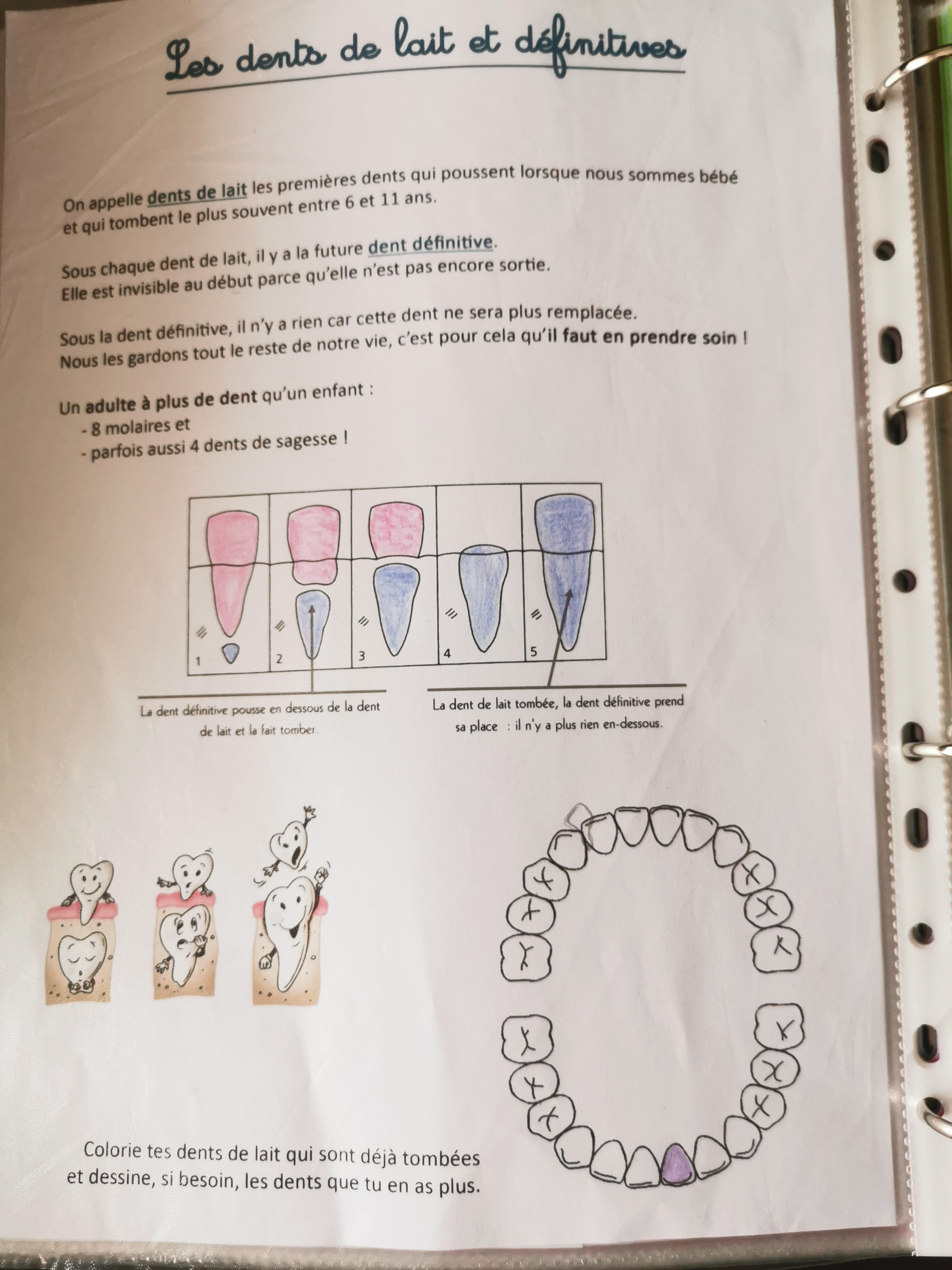 dents de lait et définitives