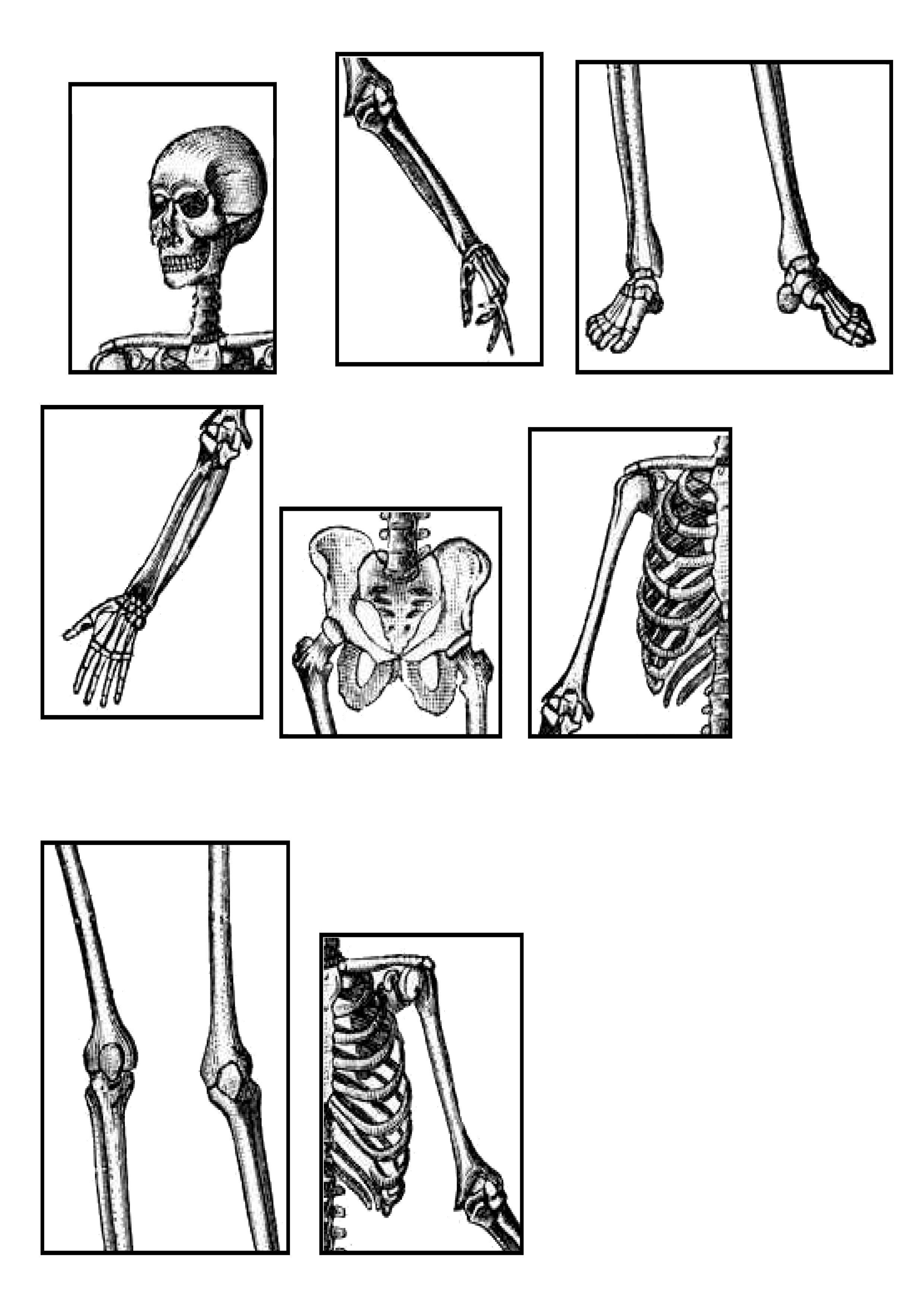 le squelette en puzzle activité de découpage