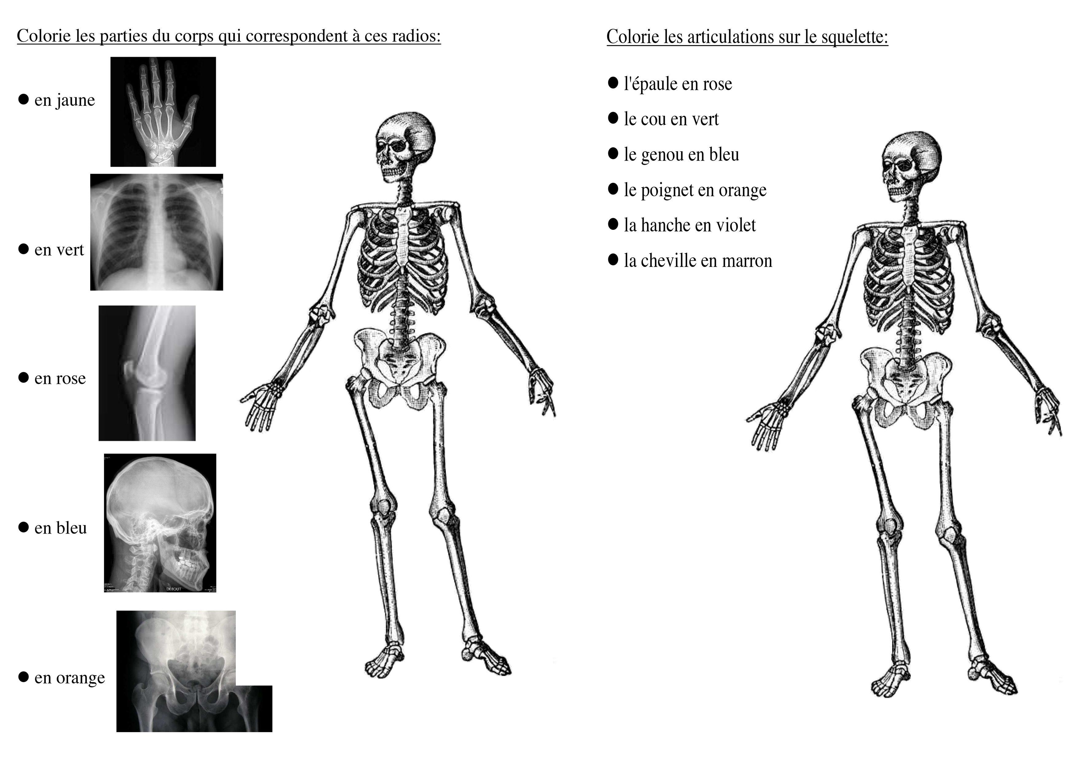 le squelette reconnaître les parties du corps