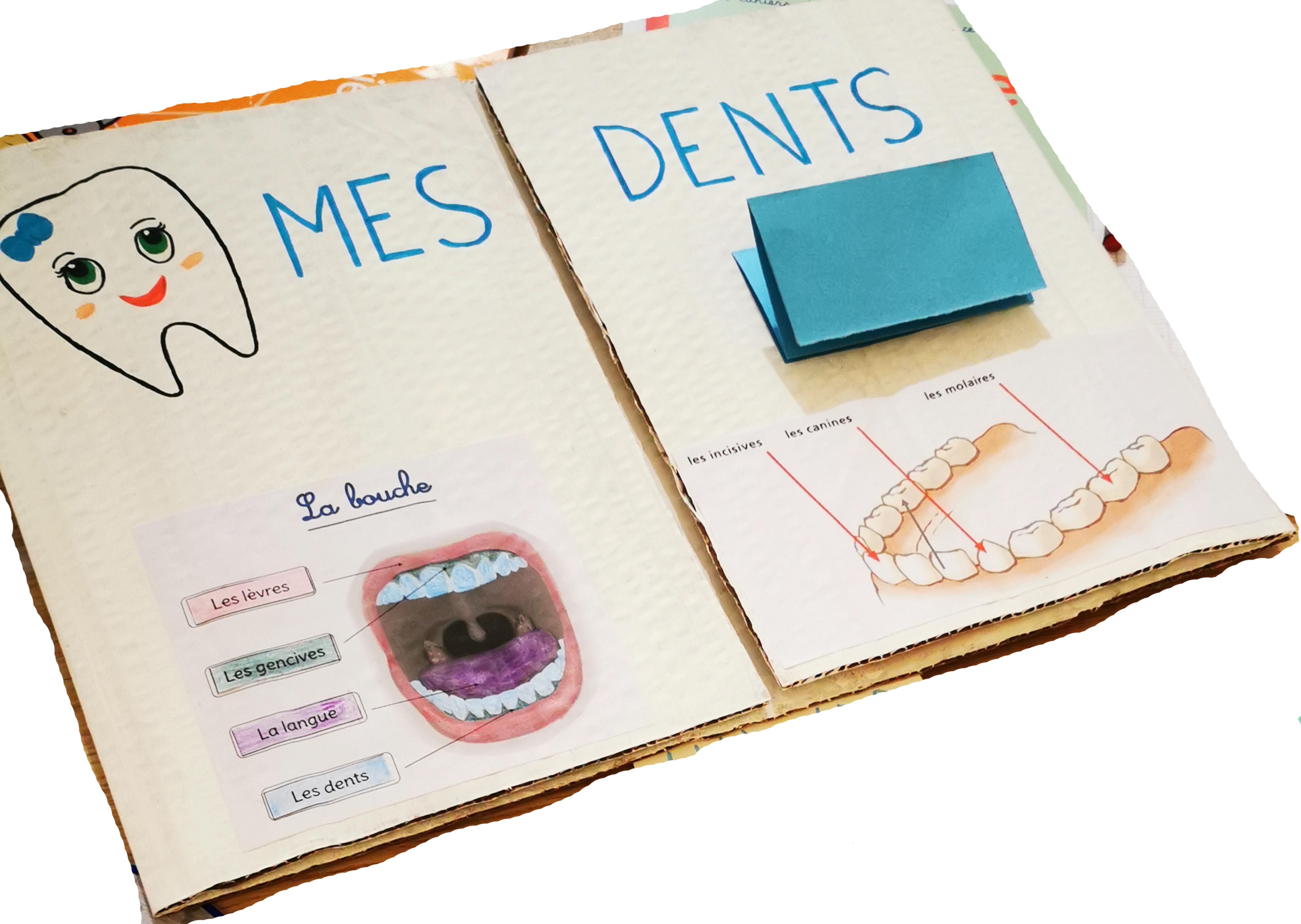 les dents lapbook