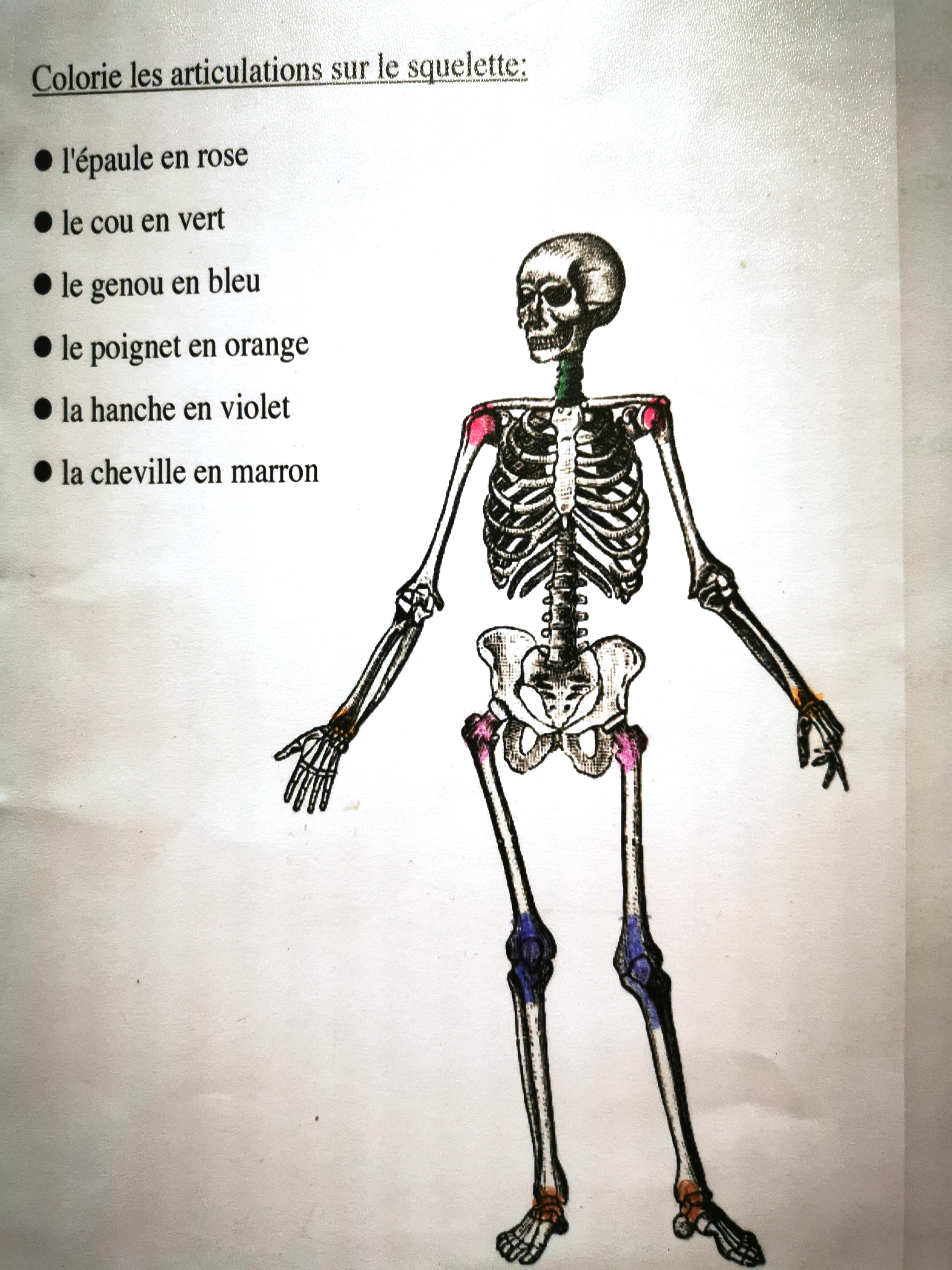 le squelette ief