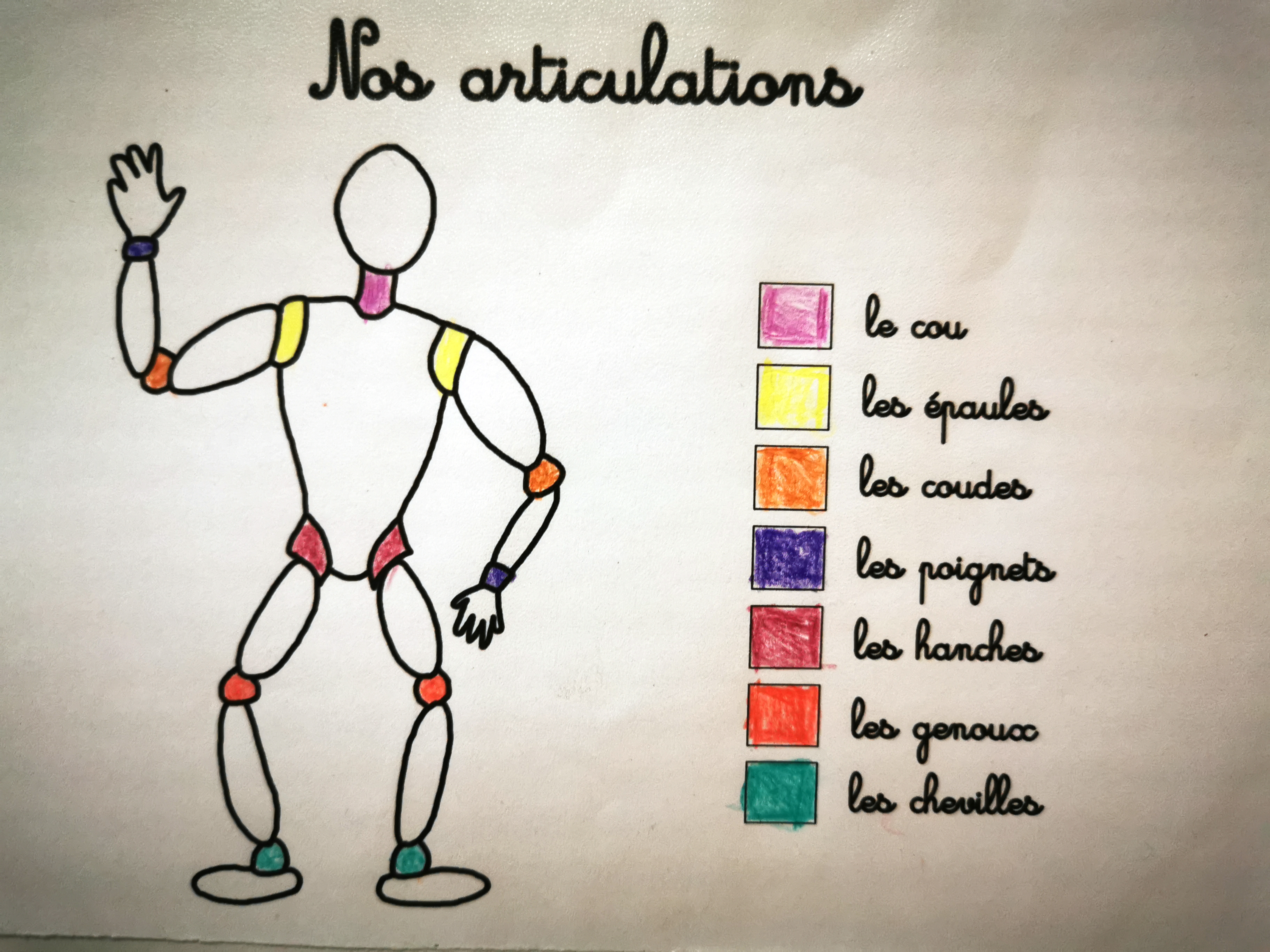 les articulations exercice